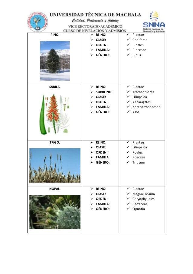 Nomenclatura y taxonom a de los seres vivos for Taxonomia de la jirafa