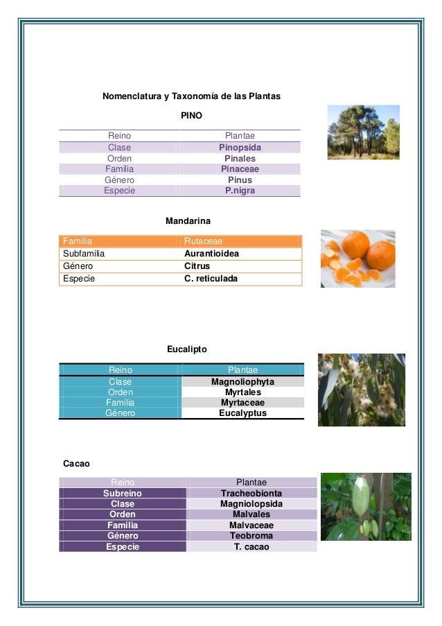 nomenclatura y taxonomia de los animales y las plantas