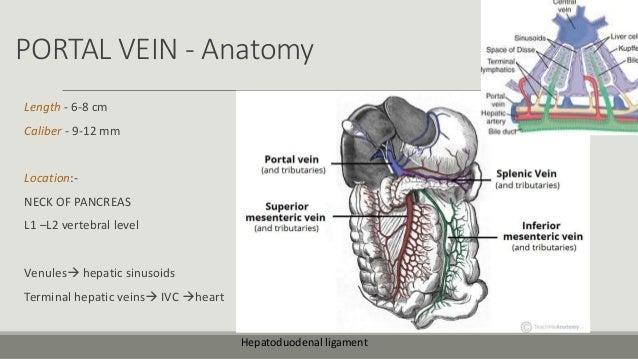 Imaging Of Portal Hypertension