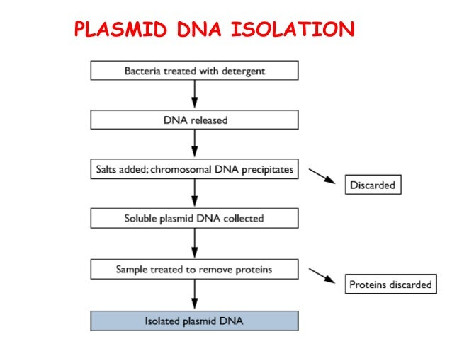 plasmid dna isolation protocol pdf