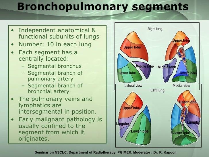 Segmental Pulmonary Artery Anatomy Choice Image Human Body Anatomy