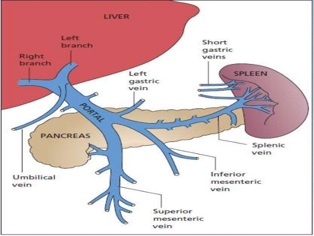 Red Blood Cell Diagram also Image32273064 besides What Dehydration Does To Your Body as well Pulmonary Ventilation And Perfusion Insights moreover All About The Negative Effects Of Glare. on no oxygen