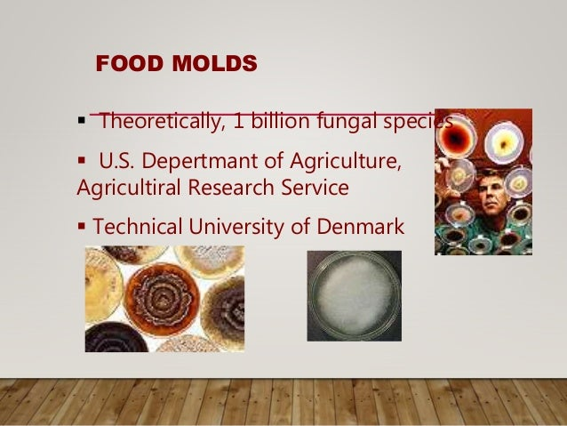FOOD MOLDS  Theoretically, 1 billion fungal species  U.S. Depertmant of Agriculture, Agricultiral Research Service  Tec...