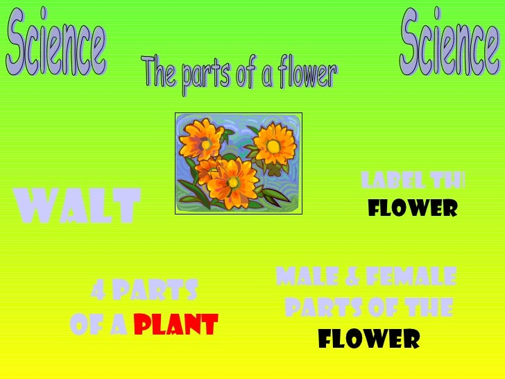 Science The parts of a flower WALT 4 Parts Of a  Plant Male & Female  Parts of the Flower Label the  Flower Science