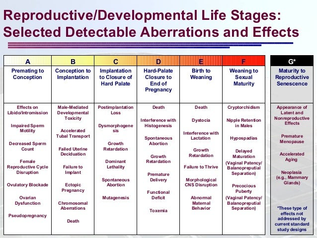 stages of conception and implantation