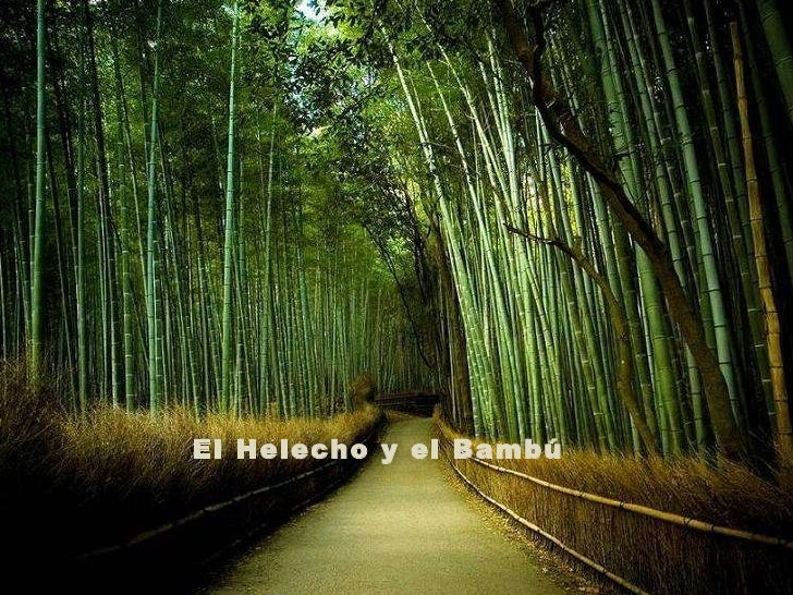 El Helecho y el Bambú