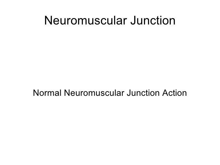 Neuromuscular Junction Normal Neuromuscular Junction Action