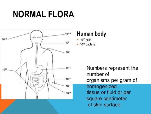 Skin flora