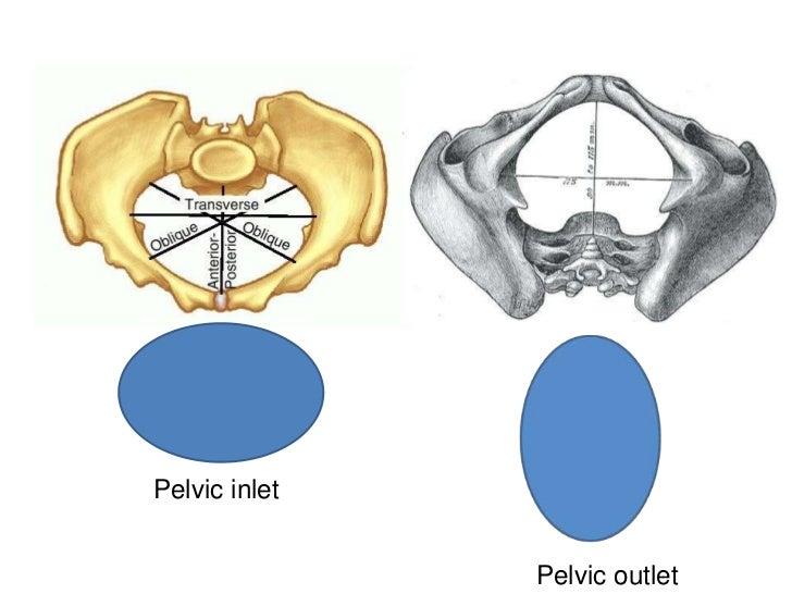 Pelvic inlet               Pelvic outlet
