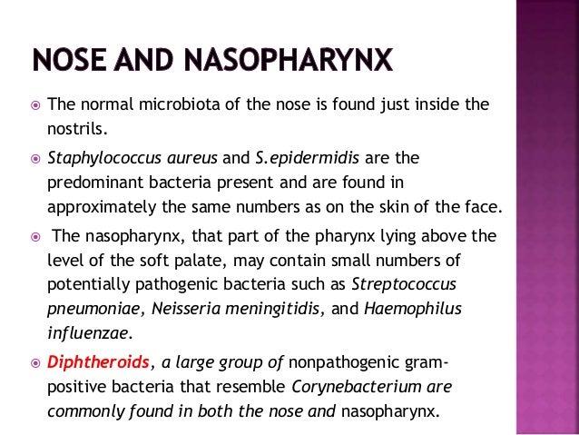 Normal Tonsils Normal microflora of h...