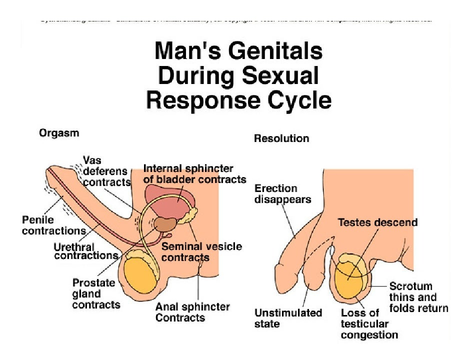 Male and female orgasms
