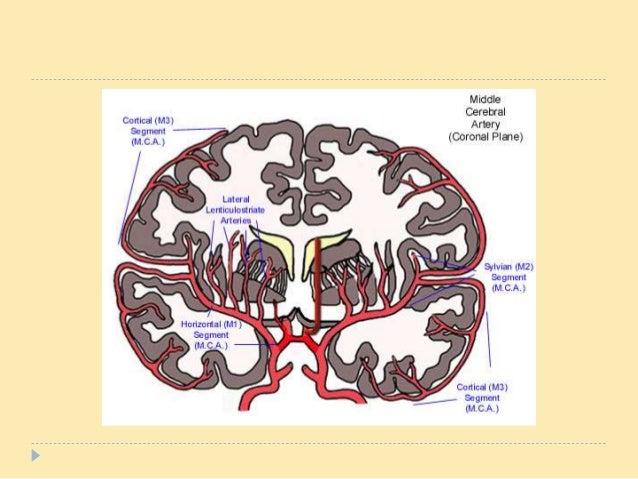 blood supply to brain pdf