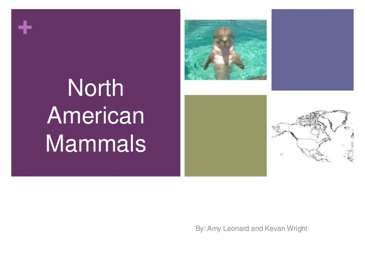 +     North    American    Mammals               Physical Environment               By: Amy Leonard and Kevan Wright
