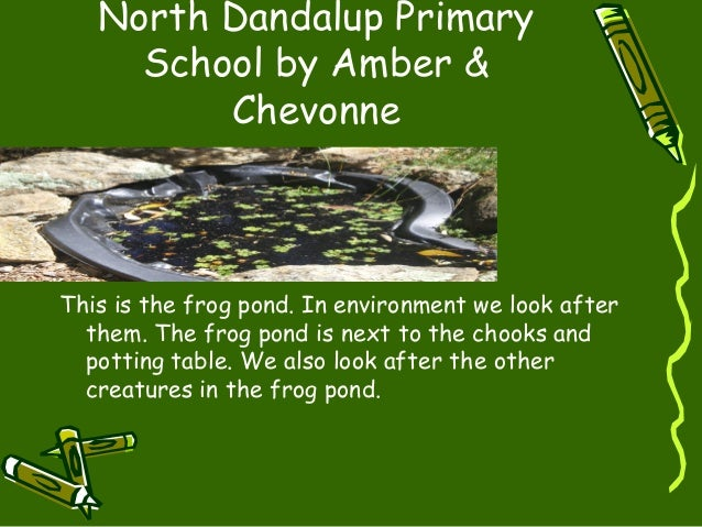 North Dandalup Primary School by Amber & Chevonne This is the frog pond. In environment we look after them. The frog pond ...