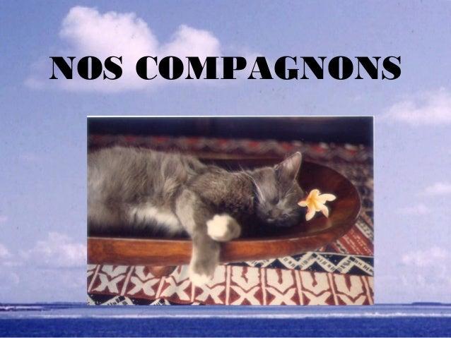 NOS COMPAGNONS