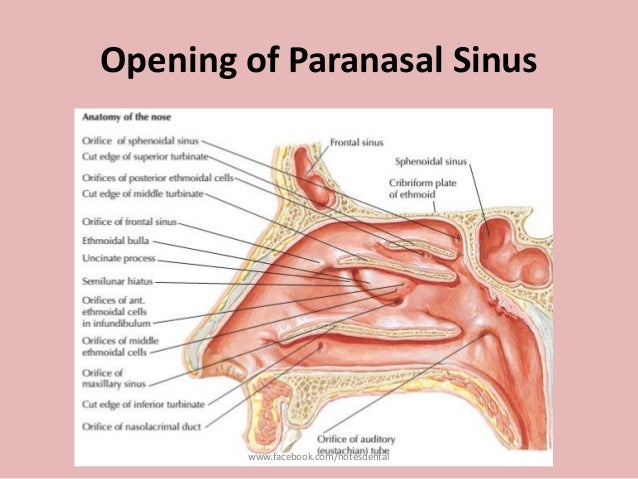 Nose and paranasal sinus