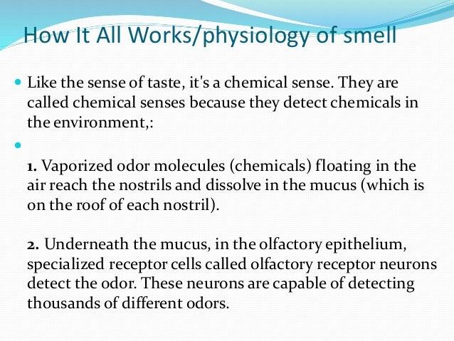 Nose & sense of smell
