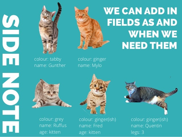 SIDENOTE colour: tabby name: Gunther colour: ginger name: Mylo colour: grey name: Ruffus age: kitten colour: ginger(ish) na...