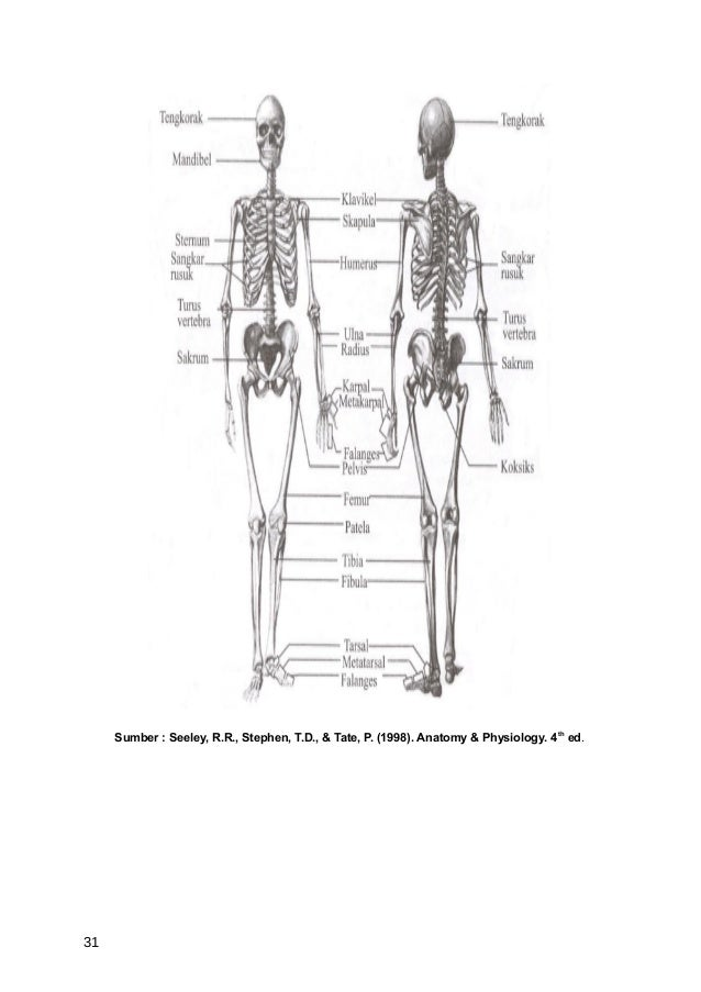 Sumber : Seeley, R.R., Stephen, T.D., & Tate, P. (1998). Anatomy & Physiology. 4 th ed.31