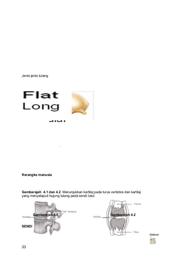 Jenis-jenis tulangKerangka manusiaGambarajah 4.1 dan 4.2 Menunjukkan kartilej pada turus vertebra dan kartilejyang menyela...
