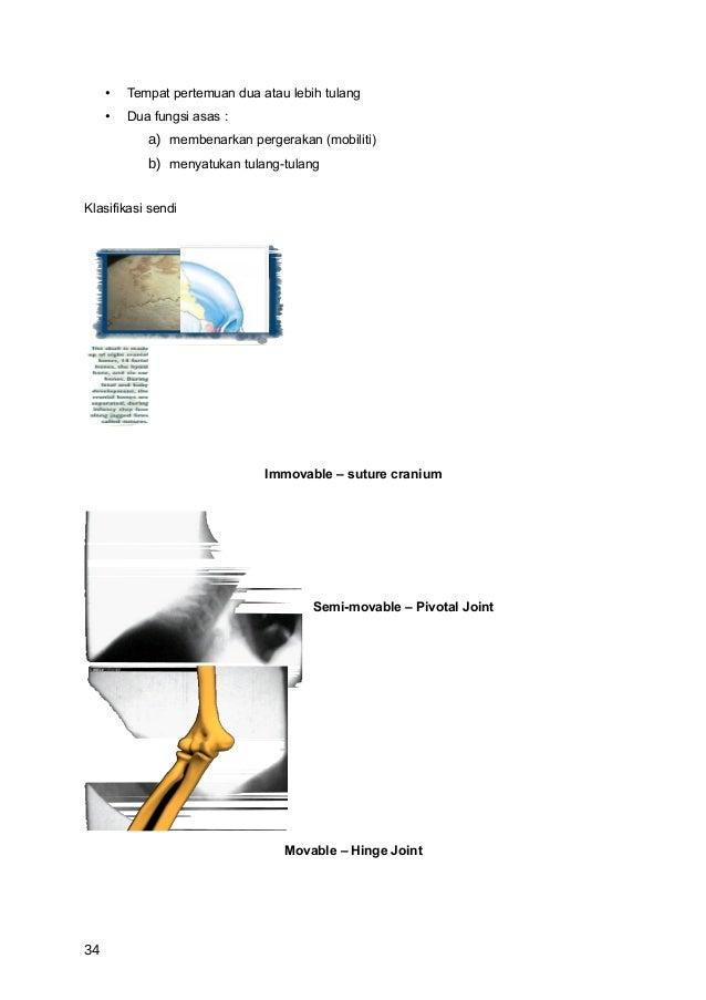 •   Tempat pertemuan dua atau lebih tulang     •   Dua fungsi asas :            a) membenarkan pergerakan (mobiliti)      ...