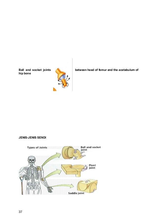 Ball and socket joints   between head of femur and the acetabulum ofhip boneJENIS-JENIS SENDI37