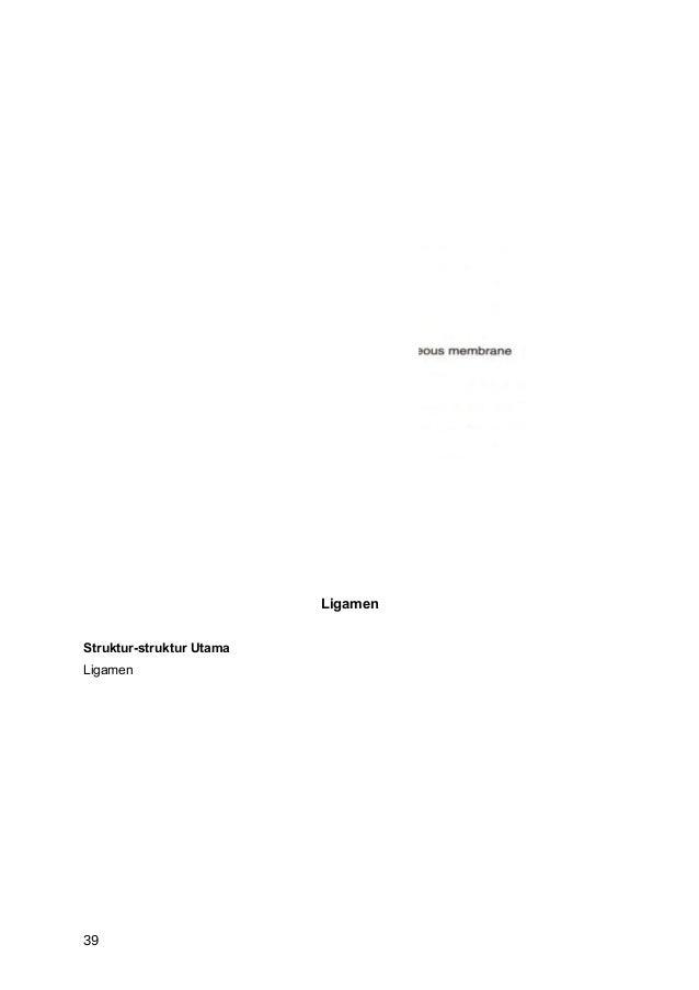 LigamenStruktur-struktur UtamaLigamen39