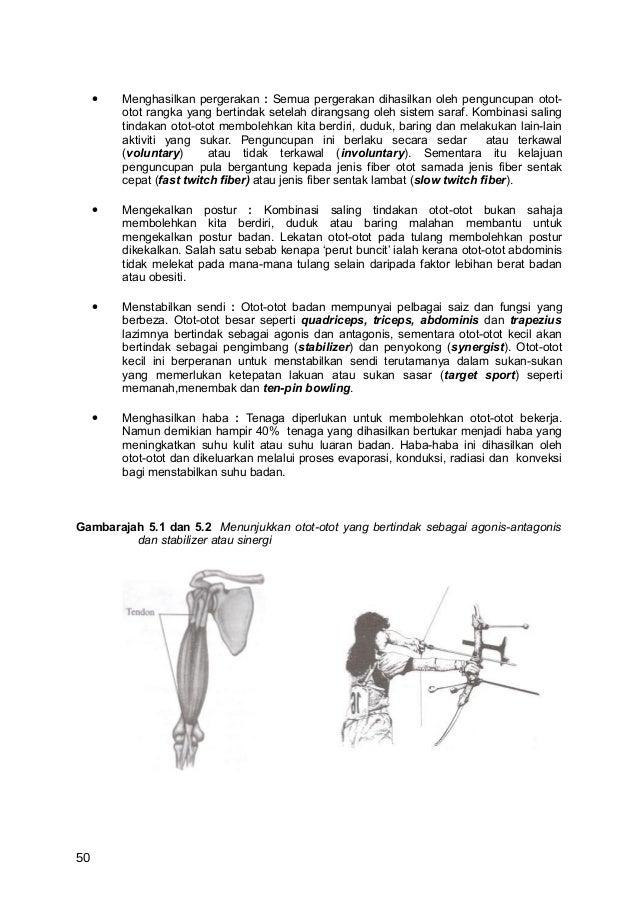 •   Menghasilkan pergerakan : Semua pergerakan dihasilkan oleh penguncupan otot-         otot rangka yang bertindak setela...