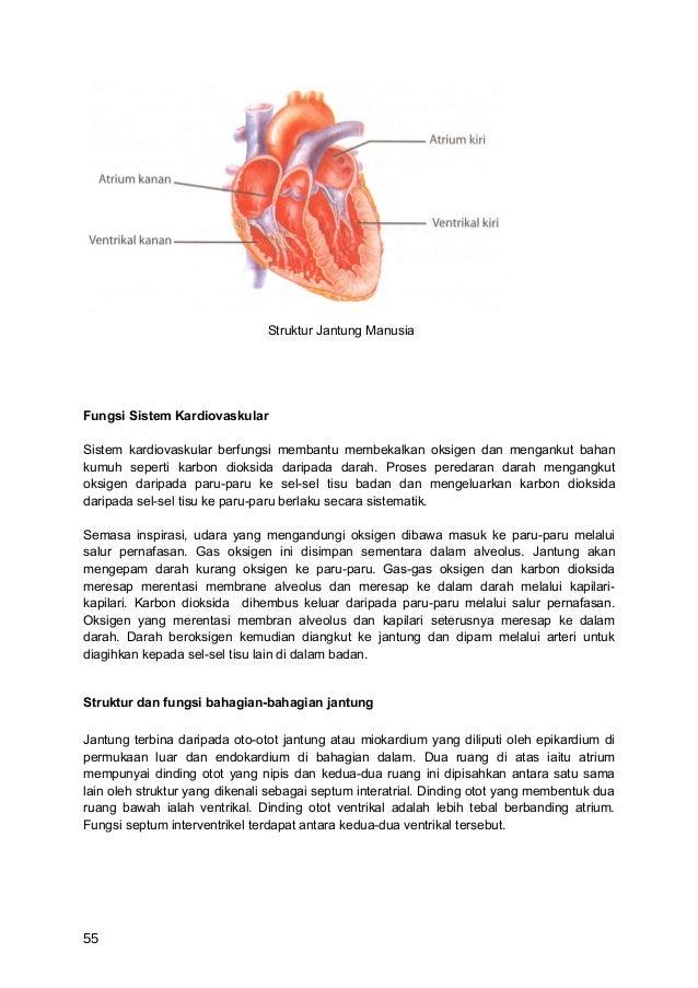 Struktur Jantung ManusiaFungsi Sistem KardiovaskularSistem kardiovaskular berfungsi membantu membekalkan oksigen dan menga...
