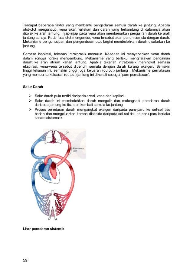 Terdapat beberapa faktor yang membantu pengedaran semula darah ke jantung. Apabilaotot-otot menguncup, vena akan tertekan ...