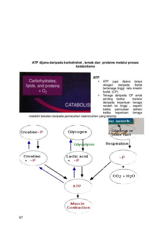 ATP dijana daripada karbohidrat , lemak dan proteins melalui proses                                  katabolisme          ...