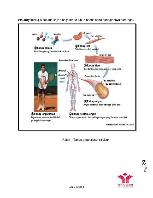 AKK©2013 Page29 Fisiologi merujuk kepada kajian bagaimana tubuh badan serta bahagiannya berfungsi. Rajah 1 Tahap organisas...
