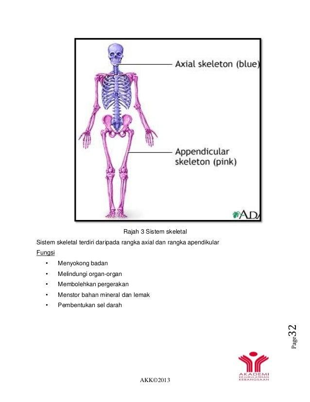 AKK©2013 Page32 Rajah 3 Sistem skeletal Sistem skeletal terdiri daripada rangka axial dan rangka apendikular Fungsi • Meny...
