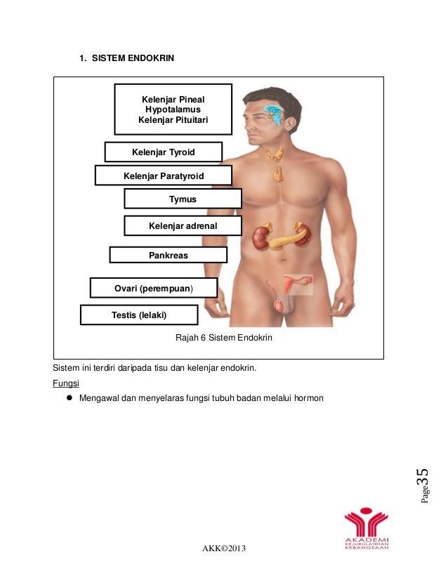 AKK©2013 Page35 1. SISTEM ENDOKRIN Rajah 6 Sistem Endokrin Sistem ini terdiri daripada tisu dan kelenjar endokrin. Fungsi ...