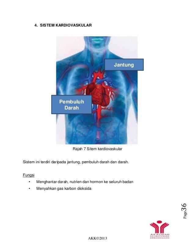 AKK©2013 Page36 4. SISTEM KARDIOVASKULAR Rajah 7 Sitem kardiovaskular Sistem ini terdiri daripada jantung, pembuluh darah ...