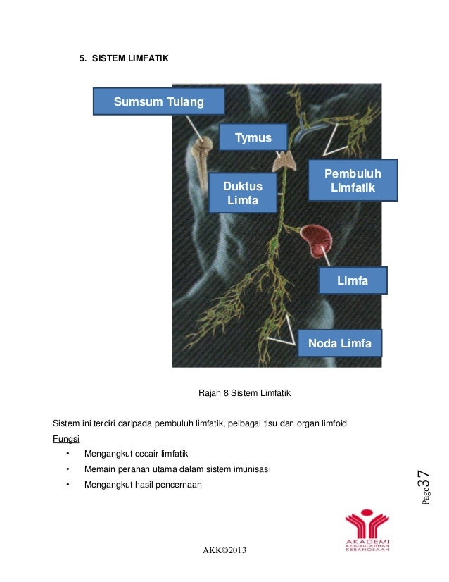 AKK©2013 Page37 5. SISTEM LIMFATIK Rajah 8 Sistem Limfatik Sistem ini terdiri daripada pembuluh limfatik, pelbagai tisu da...