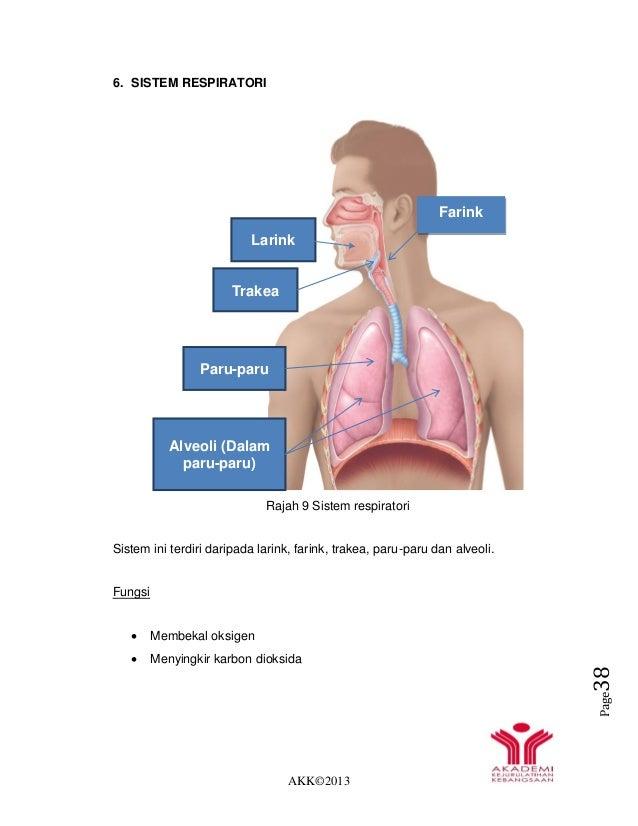 AKK©2013 Page38 6. SISTEM RESPIRATORI Rajah 9 Sistem respiratori Sistem ini terdiri daripada larink, farink, trakea, paru-...