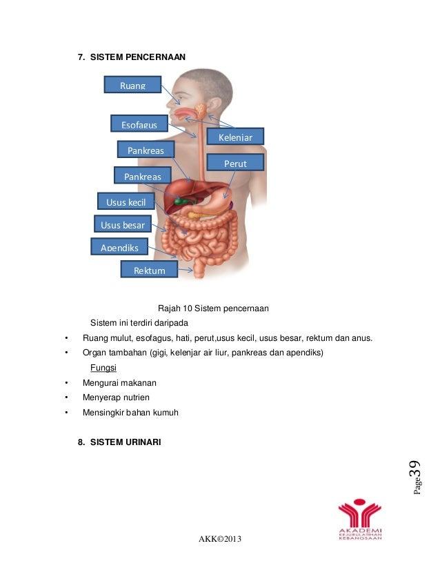 AKK©2013 Page39 7. SISTEM PENCERNAAN Rajah 10 Sistem pencernaan Sistem ini terdiri daripada • Ruang mulut, esofagus, hati,...