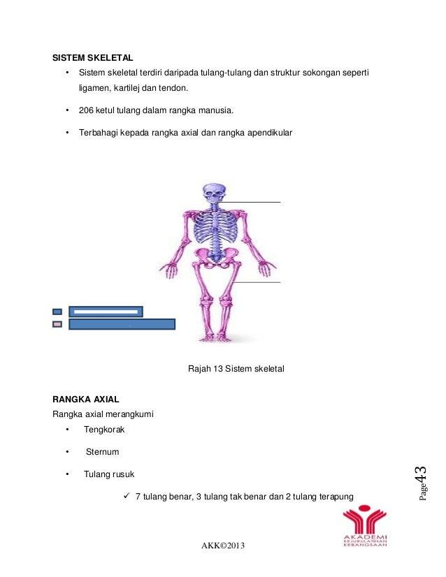 AKK©2013 Page43 SISTEM SKELETAL • Sistem skeletal terdiri daripada tulang-tulang dan struktur sokongan seperti ligamen, ka...