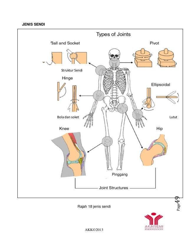 AKK©2013 Page49 JENIS SENDI Rajah 18 jenis sendi Sendi Sambung an diantara tulang Bola dan soket Lutut Pinggang Struktur S...