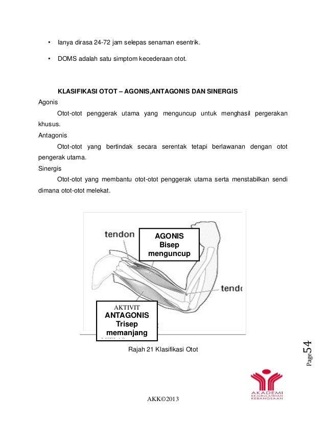 AKK©2013 Page54 • Ianya dirasa 24-72 jam selepas senaman esentrik. • DOMS adalah satu simptom kecederaan otot. KLASIFIKASI...