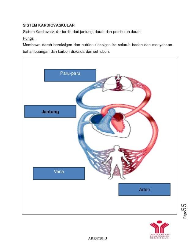 AKK©2013 Page55 SISTEM KARDIOVASKULAR Sistem Kardiovaskular terdiri dari jantung, darah dan pembuluh darah Fungsi Membawa ...