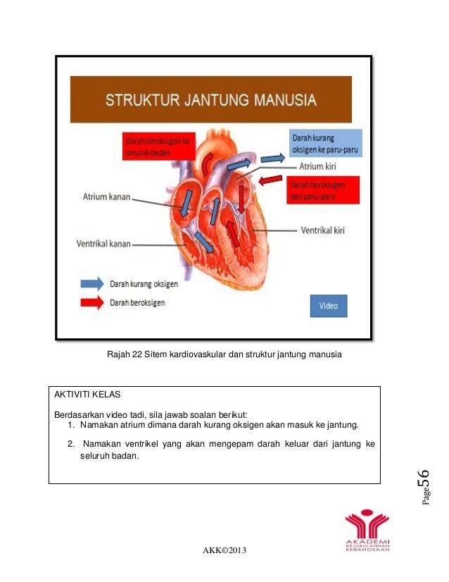 AKK©2013 Page56 Rajah 22 Sitem kardiovaskular dan struktur jantung manusia PEMBULUH DARAH AKTIVITI KELAS Berdasarkan video...