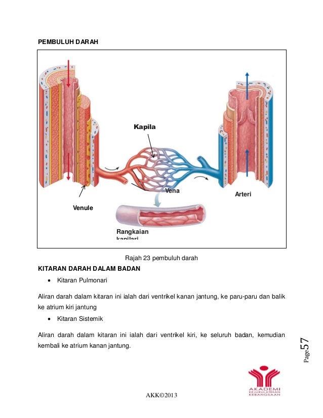 AKK©2013 Page57 PEMBULUH DARAH Rajah 23 pembuluh darah KITARAN DARAH DALAM BADAN  Kitaran Pulmonari Aliran darah dalam ki...