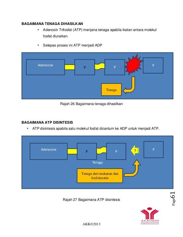 AKK©2013 Page61 BAGAIMANA TENAGA DIHASILKAN • Adenosin Trifosfat (ATP) menjana tenaga apabila ikatan antara molekul fosfat...