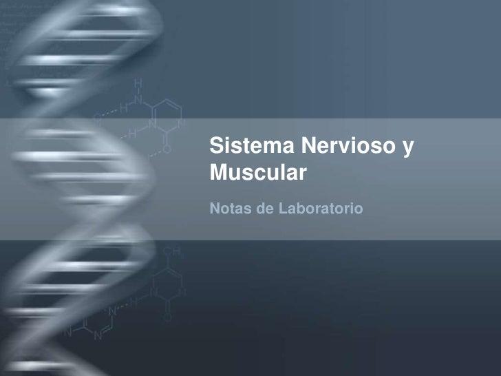 Sistema Nervioso y Muscular<br />Notas de Laboratorio<br />