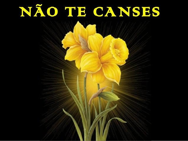 NÃO TE CANSES