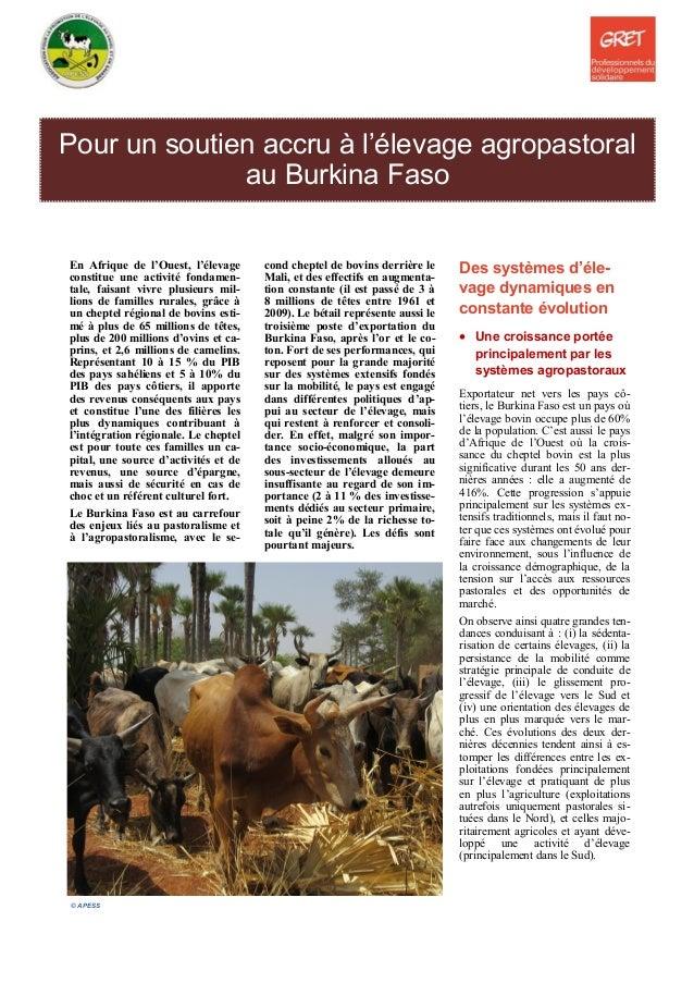 Pour un soutien accru à l'élevage agropastoral au Burkina Faso En Afrique de l'Ouest, l'élevage constitue une activité fon...