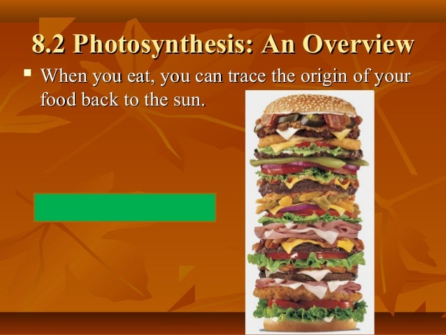 Notes photosynthesis and cr