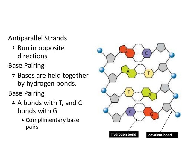 the characteristics of dna and the use of the model of dna structure in classrooms Dna structure - learn how these tiny molecular forces known as hydrogen bonds stabilize the dna double helix structure take a look at hydrogen bonds (and other molecular forces) as they relate to dna molecular structure.